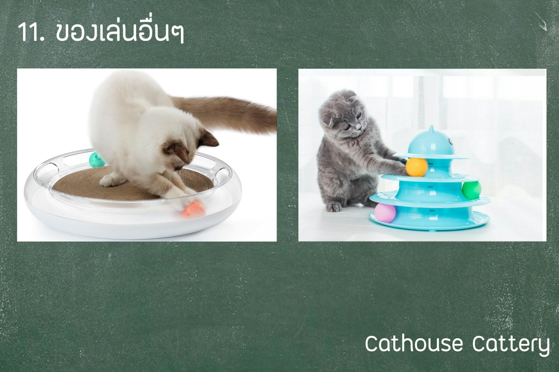 ของเล่นแมว