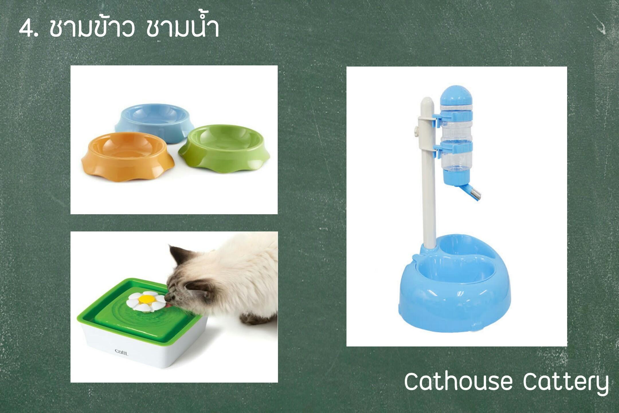ชามข้าวแมว